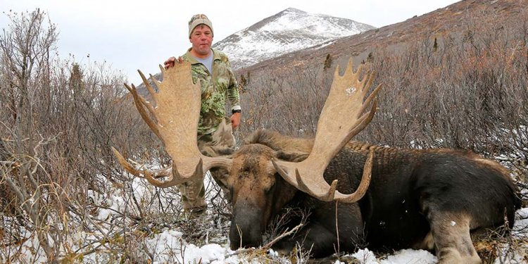 British Columbia Moose Hunting